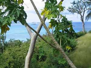 Property for sale in the Caribbee